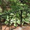 fence border LMSGF-51007