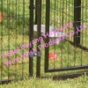Powder coated Welded Dog cages