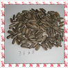 new big sunflower seeds 3638