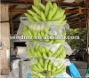 PP non-woven fabric agriculture