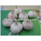 selling best jinxiang garlic 2011 new crop,normal white garlic