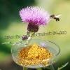 Silymarin 80% / Milk Thistle Extract