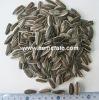 sunflower seeds 5009