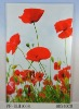beautiful flower glass prints