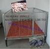 FLS Powder painting & hot-dip galvanized piglets nursery crate