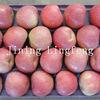 Qinguan Apple Price 2012 new