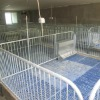 Hot Galvanized Rail, Plastic Slat Piglet Crate