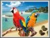 2012 best seller PET 3d postcards animals