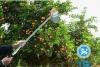 YQL telescopic fruit pickers