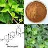 China Ivy leaf extract
