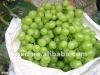 2012 fresh green grape