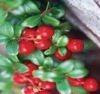 Rose Hip Extract 25:1