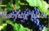 the best grape seed oil