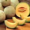 fresh green muskmelon