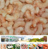 frozen peeled shrimp