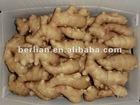 New china chinese fresh mature ginger