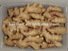 New china chinese fresh mature ginger