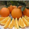 fresh big navel orange