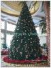 Hot Sale Christmas Tree