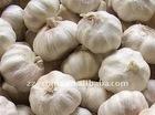 2011 new crop, Chinese pure white garlic