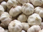 2011 new crop, Chinese pure white garlic