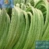 PVC razor wire(manufacturer & exporter)