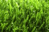 DOUBLE-STEM ARTIFICIAL LAWN