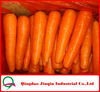 "JQ ""Carrot Price"" New Crop Fresh Red Carrot 2012 Price (100g, 150g, 200g)"