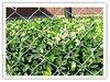 Fence mesh for garden