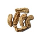 Gastrodia elata plant roots/ Rhizoma Gastrodiae