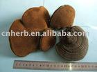 Phellinus linteus extract, Phellinus extract, other mushroom ext.