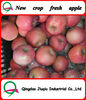 fuji apple New crop china fresh fuji apple