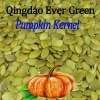 new crop chinese pumpkin seeds kernels