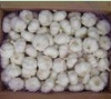 dry pure white garlic