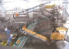 Canned fruit chain slat conveyer machine conveying system