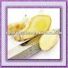 china fresh yellow ginger