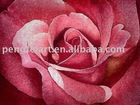 beautiful pink rose canvas painting