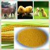 NON-GMO powder corn gluten meal