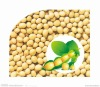 New Crop yellow Soybean
