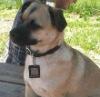 2012 QR code dog tag