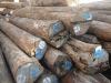 Burma teak logs for veneer