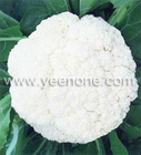 2012 Fresh Cauliflower