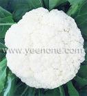 2012 Fresh Cauliflower