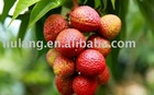 Sweet and small seed litchi
