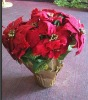 2012Christmas decorative artificial poinsettia