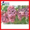 2012 New green grapes