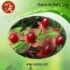 Cranberry anthocyanins 25% UV