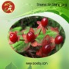 Cranberry anthocyanins 25% UV