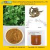 Siberian ginseng extract with Eleutherosides B+E from GMP Manufacturer