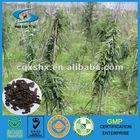Diebetes Chinese Herbs(Rhizoma Polygoanati)
